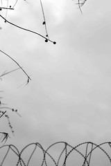 Trees are poems the earth writes upon the sky (Abeer Khan) Tags: naturepoetry blackandwhitenature abeerkhanphotography abeerrafeeqkhan blackandwhiteabeerkhan