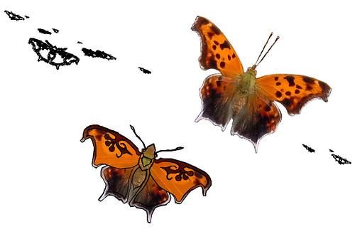 tattoo butterfly questionmark biomimicry butterflywings 3dprinting polygonia anglewing questionmarkbutterfly polygoniainterrogationis butterflymigration butterflytattoo bilateralsymmetry laptoptattoo polygoniasp anglewingbutterfly colormimic polygoniaspp algorithmicbiomimicry algobio polygoniamigration algorithmicarthropods algorithmicorganism polygoniainterrogator tattooforyou 3dvirtualmachine butterfliesofdallas