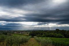 Tuscany, Italy (Morton Rainey) Tags: italien italy sun clouds italia wolken pisa tuscany firenze siena montepulciano blau sonne wald sonnenstrahl regen wein toskana rebe oliven weinrebe olivenbume