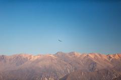 Cruz del Condor, Pérou (Thierry Fiquemont) Tags: condor pérou trajetarequipacabanaconde