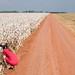 Registrando uma plantação de algodão