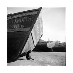 dania • essaouira, morocco • 2014 (lem's) Tags: black rolleiflex port cat boats chat noir bateaux morocco maroc essaouira planar dania thecatwhoturnedonandoff littledoglaughednoiret