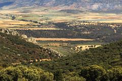 IMG_2227 Spain,country Valencia - No 4 -  N 38.601116  W 2.70046 (jaro-es) Tags: españa nature canon landscape spain natur natura landschaft spanien naturesfinest spanelsko naturewatcher eos70d naturemaster