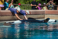 Kiska (Jennifer Stuber) Tags: ontario niagarafalls whale orca killerwhale marineland mlc kiska friendshipcove marinelandcanada