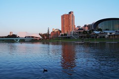 River Torrens north bank view looking southeast, August 2014 (Adriano_of_Adelaide) Tags: city sunset bird water buildings evening footbridge dusk adelaide rowing rowboat cbd ripples riverbank rowingclub southaustralia newbridge intercontinental clearsky conventioncentre festivalcentre intercontinentalhotel rivertorrens adelaideconventioncentre cityofadelaide riverbankprecinct riverbankpedestrianbridge