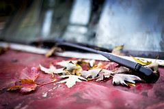 Fallen - II (Playing_with_light) Tags: old autumn red water glass up leaves rain metal truck droplets nikon montreal dirt rusted beat d800 windshiel whipers