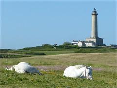 La paix des braves (Marcello_14) Tags: horse lighthouse bretagne phare chevaux finistre ledebatz