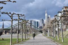 2017 Grauer Himmel über der City von Frankfurt (mercatormovens) Tags: frankfurt main city platanenallee skyline hochhäuser