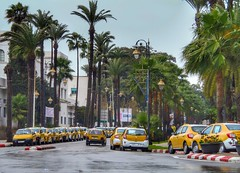 Taxi Strike (Yassine Abbadi) Tags: taxi strike maroc morocco tetouan tetuan yallow car cab palm tree road rain sky