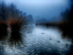 Foggy deer crossing (flowerweaver) Tags: fog deer crossing grasses trees rocks river earlymorning blue reflections quite