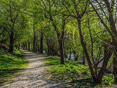 5/52: Walk by the river (JosipaBB) Tags: river walk outdoor tree sunny saturday fujifilm finepix s2500