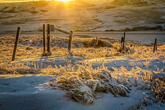 Golden Frost (mnenson) Tags: provincialparks landscape sunset sunsets nature landscapes cypresshillsinterprovincialpark snow seasons environment timeofday alberta naturalphenomena canada winter places