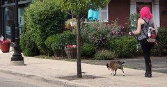 Dog-walking Diva (Dragonize) Tags: southlyon