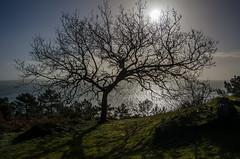 A contre jour (nolyaphotographies) Tags: crozon morgat finistere bretagne france nikon europe monde arbre free contre jour herbe mer sea rade iroise bleu landscape seascape