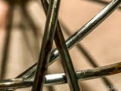 70/365 - Close up