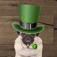 st patricks day (monicaclick) Tags: animal backdrop background blank board celebration clover coins concept copyspace day decoration design dog event feast fortune funny gold golden green happy hat holiday horizontal ireland irish isolated leafs luck lucky party patrick pipe pot promotional pug puppy saint shamrock sign smoking stpatricksday success symbol symbolic talisman top tradition traditional white wishing wood wooden leprechaun