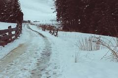Val Casies (Sofia Podestà) Tags: cortinainverno2017neve italy snow road landscape mountain inverno livingmountain sofia podestà sofiapodesta sofiapodestà outdoor hike travel adventure folk 2017 dreamy dreamscape icescape dream wonderland dolomites dolomiti alps alpi valcasies alto adige sudtirol altoadige