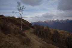 southern Switzerland (Toni_V) Tags: m2403284 rangefinder messsucher leica leicam mp typ240 35lux 35mmf14asphfle hiking wanderung randonnée escursione cimadimedeglia tessin ticino südschweiz switzerland schweiz suisse svizzera svizra europe alps alpen landscape ©toniv 2017 170318