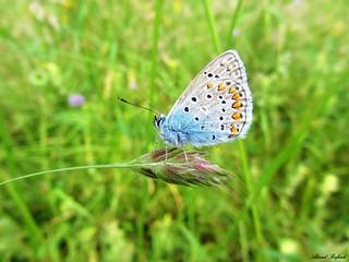 Butterfly 1192