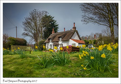Chocolate Box Cottage (Paul Simpson Photography) Tags: appleby northlincolnshire march paulsimpsonphotography photoofphotosof imagesof imageof march2017 daffodils flowers spring photosofspring lincolnshire england chocolatebox lgg3 mobilephonephotography village rurallife photosofengland englishcottage