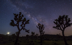 I Still Haven't Found What I'm Looking For (carolina_sky) Tags: joshuatreenationalpark u2 album night sky stars milkyway silhouette trees desert mojave cactus pentaxk1 pentax1530mm lasvegas moon