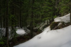 all I need is my camera, and my Asolo's... (Alvin Harp) Tags: ca89 ca44 lassennationalforest northerncalifornia foreststream winterscene mountainforest deepsnow hiking naturesbeauty sonyilce7rm2 fe41635zaoss adventure march 2017 alvinharp