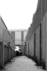 cat place (nickvelarde) Tags: kuwait ofwkuwait ofw pinoyphotographers lines ilford nicephoto monochrome bnw blackandwhite cat photography streetphotography street 50mmf14 nikonfm2 nikon ilfordfilm pindot pindotkuwait filmdot