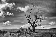 Exposed (Latitude53 Photography) Tags: monochrome blackandwhite tree stonebuilding ruin derbyshirelife derbyshire winnatspass peakpark peakdistrict moody clouds spring nikon blackdiamond d7000 nisifilters ndfilters polariser