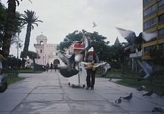 Born to fly (leonardovasquez) Tags: pigeons birds bird yashica t4 wings beach lima peru analog fuji 35mm fujifilm superia xtra