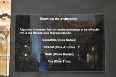 Tutankamón 009 (on_toi?) Tags: rey faraón egipto sarcófago momias momificacón museo tumba tutankamón