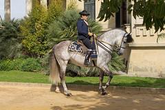 Jerez_RealEscuela_0001 (mlckeeperkeeper) Tags: horses espaa spain andalusia jerez jerezdelafrontera realescuela dancinghorses realescueladearteecuestre