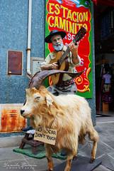 Sesión: Tango Photography (Yamila Barcia) Tags: old bw music baby house streets color argentina children fun book kid buenosaires nikon colorful photographer buenos aires antique tango infantil laboca instruments antiguo santelmo caminito colorido bandoneon facundo