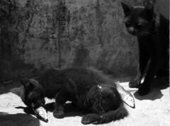 Les chats. (Saundi Wilson Photography) Tags: cats fish kittens morocco sardines essaouira blackcats