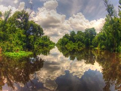 Bayou reflections (Notkalvin) Tags: reflection louisiana tour swamp hammond laplace swamppeople mikekline notkalvin