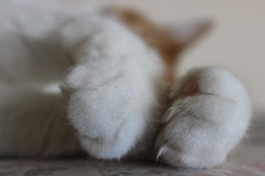 Paws (ajmiller12) Tags: cute cat paws