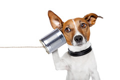 dog on the phone (sharklasers73) Tags: old dog pet white cute animal vintage puppy tin funny chat call technology russell message phone telephone humor adorable talk voice canine cable center can headset jackrussell sound ear speaker string microphone conference conversation talking interview information isolated operator speak connection hear headphone earphones connect ringing communicate listen callcenter billilesoldschool