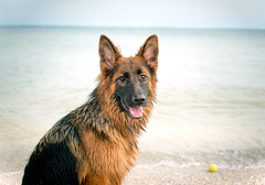 Ruby at the Beach (TCgraphicDesign) Tags: summer dog pet lake motion cute beach nature wet water beautiful beauty animal female swim river puppy season fur fun outside mammal happy moving jump friend funny energy play action outdoor s
