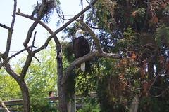 IMG_1720 (sambhensley) Tags: eos zoo toledo 50d caonon