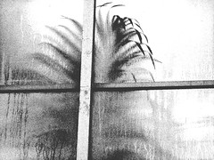 Hot Yoga (mindfulmovies) Tags: wood blackandwhite bw white black nature monochrome daylight blackwhite nikon noiretblanc availablelight creative beautifullight schwarzweiss blackdiamond blackwhitephotography gettingclose creativeshots biancoynegro absoluteblackandwhite mindfulmovies