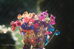 Bouquet 3 (jah32) Tags: summer color colour colors nikon colours summertime bouquet inmybackyard summercolour summercolours d7000