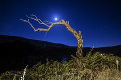 árbol nocturno (ex-otico) Tags: