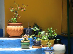 Pot shot [Explored] (pefkosmad) Tags: vacation plants holiday germany island town harbour planters steps hellas explore greece pots greekislands boattrip griechenland scenes symi dayout dodecanese gialos explored pefkosjune2014