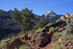Capitol Reef NP, Cassidy Arch Trail (mstoecklin) Tags: capitolreefnp cassidyarchtrail