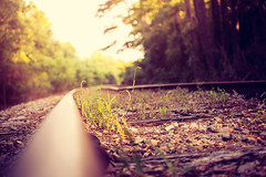 Homeward Bound (AlyKPhoto) Tags: old railroad travel macro abandoned nature train canon outside outdoors eos 50mm warm bokeh perspective sigma rail railway traintrack f28 6d