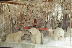 Polar Bear Parade (mabilletdoux) Tags: bear red white window shopping toy store nikon display saratoga broadway polar february chowder chowderfest 2014