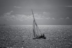 Tiara (Antti Tassberg) Tags: blackandwhite bw tiara monochrome 30 finland boat wooden helsinki sailing yacht mug regatta xxx pint 5m sailingboat uusimaa purjevene purjehdus tuoppi puuvene viaporin