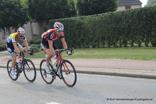 Geel Oosterlo  (274)