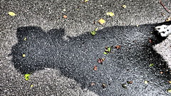 walk the dog III (joe.laut) Tags: bw dog blackwhite august rico sw schwarzweiss miniseries 2014 norby incoloro auntielu joelaut