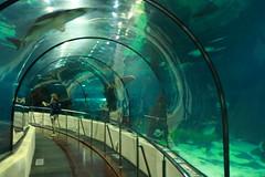 l'aquàrium (RW-V) Tags: barcelona 5000views laquarium 100faves 4000views 6000views 7000views 8000views canonefs1755mmf28isusm 80faves 7500views canoneos60d dwwg