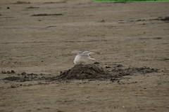 DSC_0944 (wolfjonny) Tags: sea see northsea nordsee mwen
